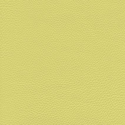 Ginkgo Endive 013 32 032